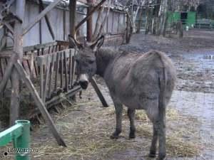 Грустный ослик. Гжель (Синь России)