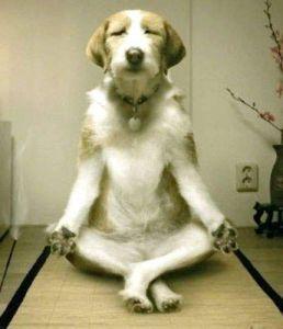 Meditating-Dog-2012-05