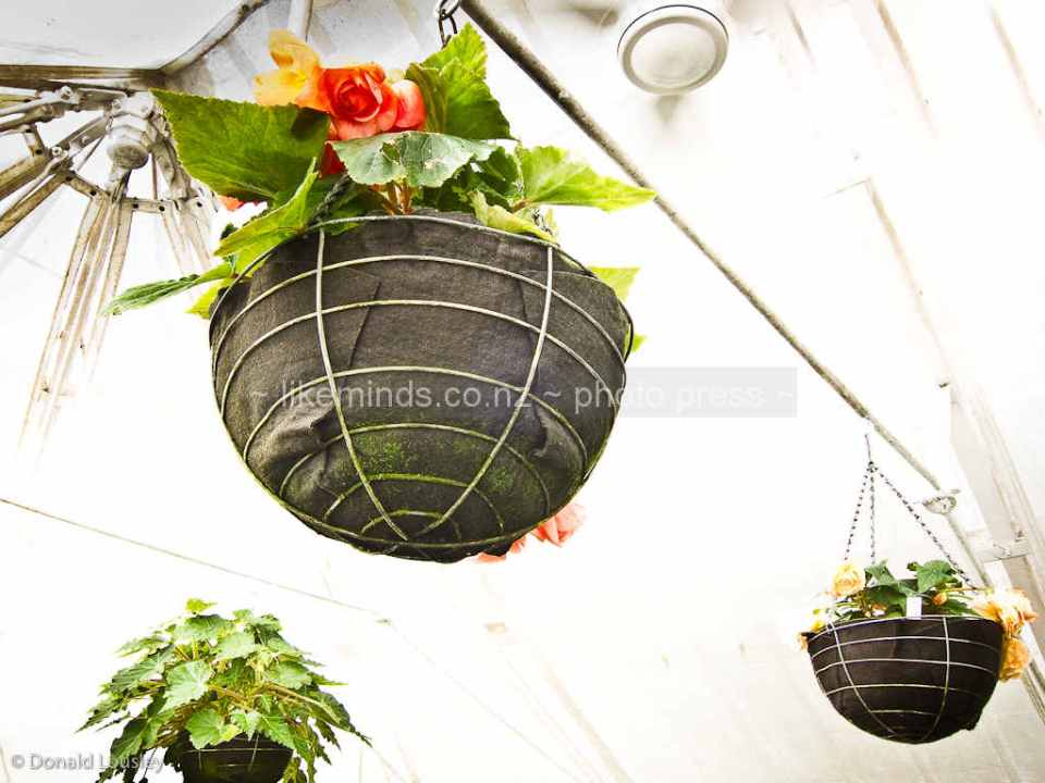 Flowering Plants in Hanging Baskets by Donald Lousley.