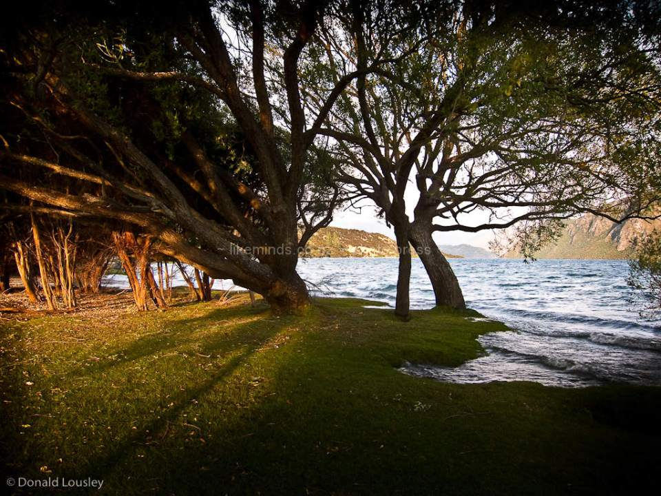 Sunrise behind trees Lake Wanaka by Donald Lousley.