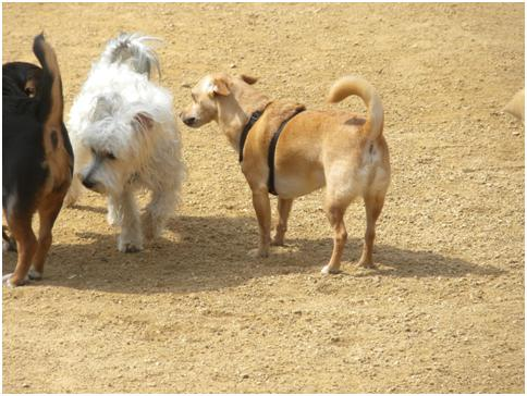 Wordless Wednesday – Culver City Dog Park Finally Open! (3/6)