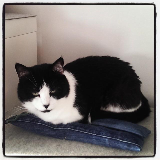 Cat pants.