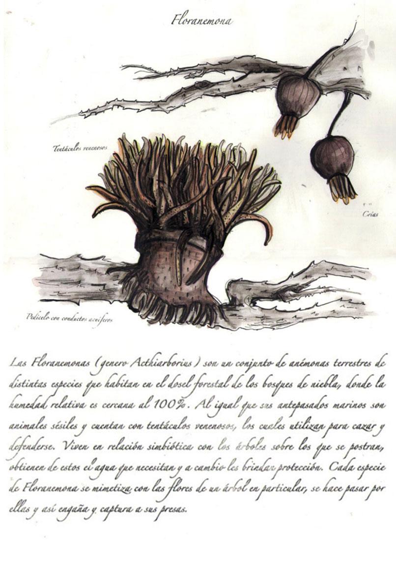 floranemona_limulus