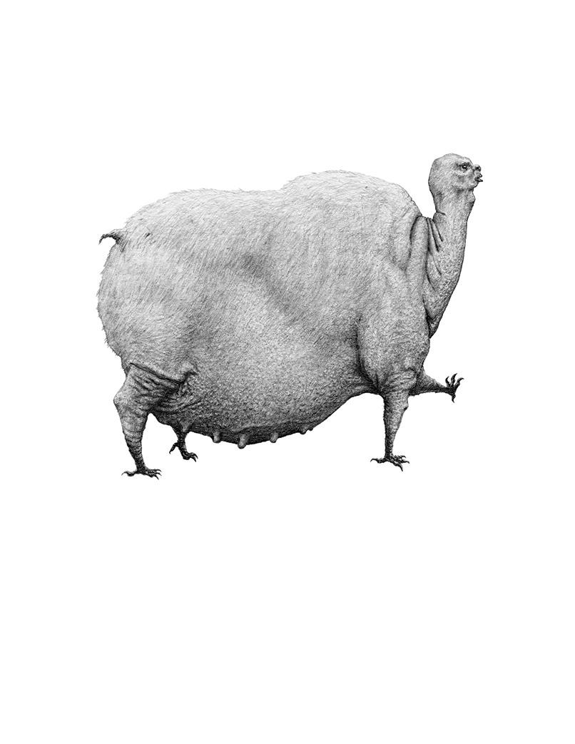 Bestiario de animales inexistentes dibujos y descripciones13 - copia (1)