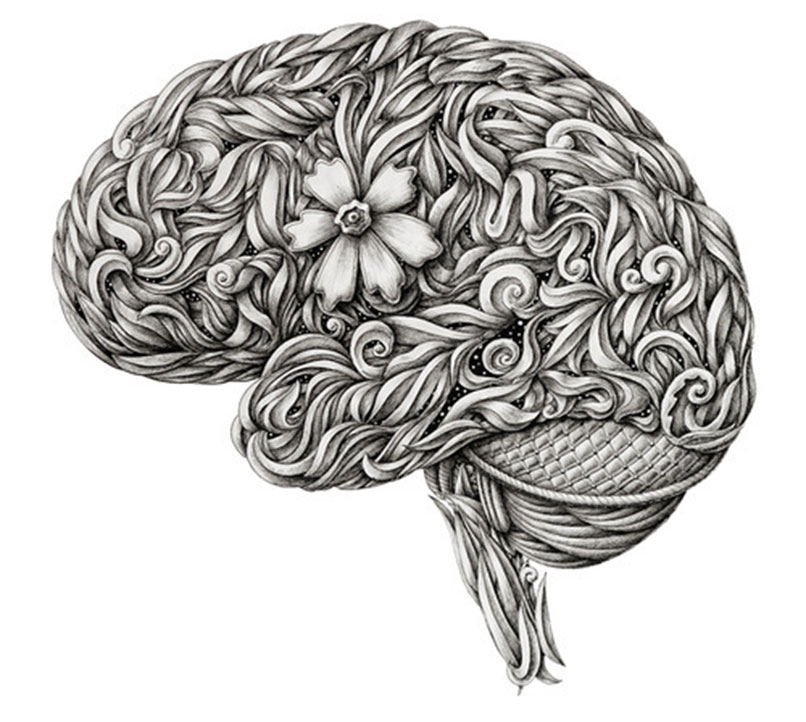 limulus_alex-konahin-cerebro