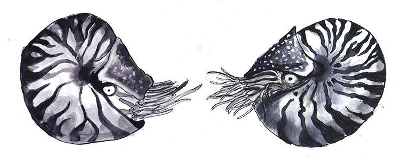 Foto-5-Nautilus