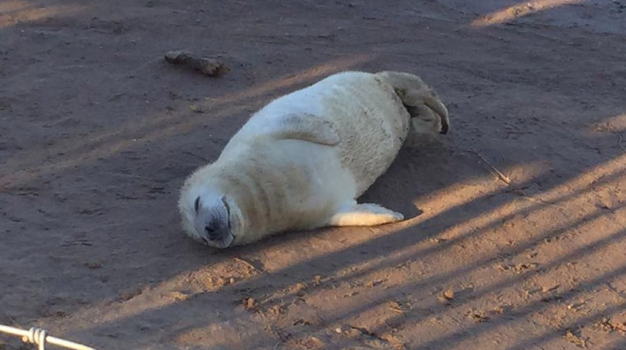 Have you see the seals yet? Photo: Lincolnshire Reporter