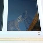 Caption the kitties!