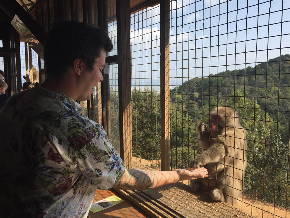 Travel Japan - Guide to Japan - Arashiyama Monkey Park