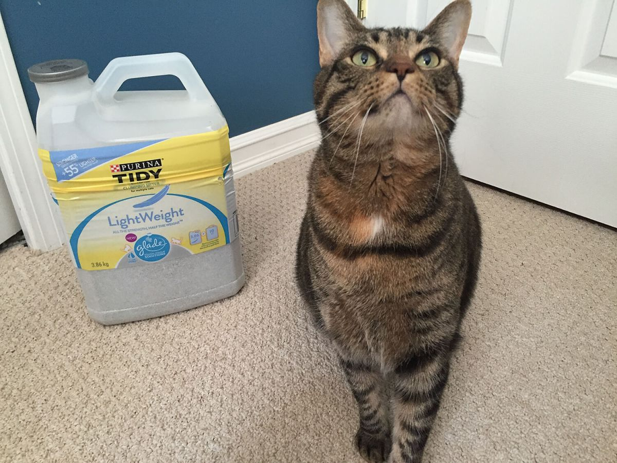 Purina Pet People: Tips for the Best Cat Litter Experience (+ Tidy Cats Giveaway!)