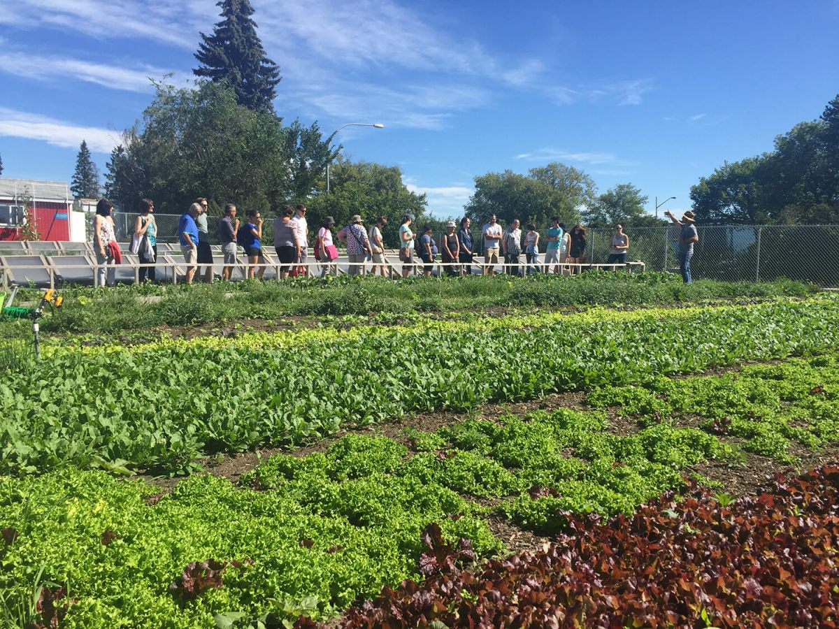 Explore Alberta: How To Make The Most of Open Farm Days 2016 (Preview)