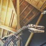 Philip J Currie Museum - Grande Prairie - Explore Alberta - Highway 43 - Travel - Dinosaur