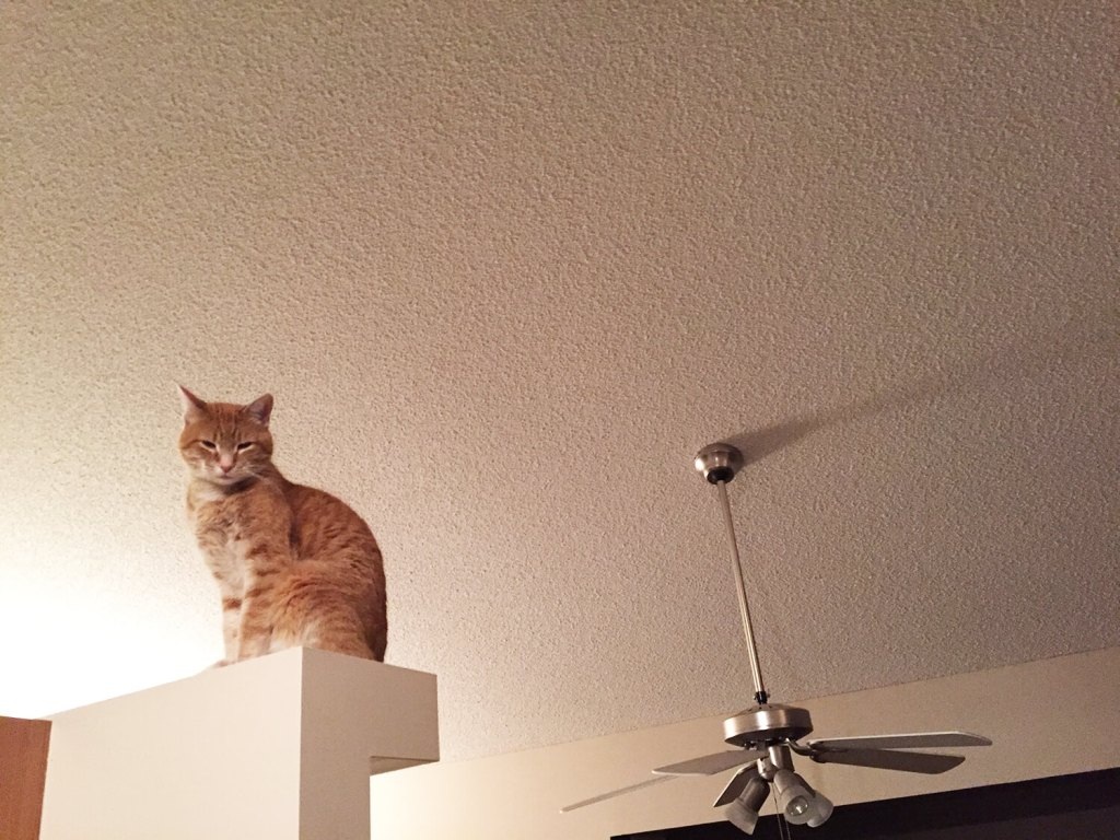 Loki perched up high. Looking down on his minions.