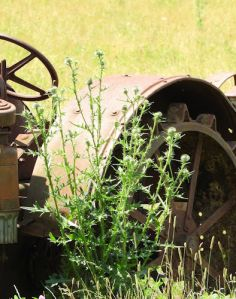 The Old Abandoned Tractor