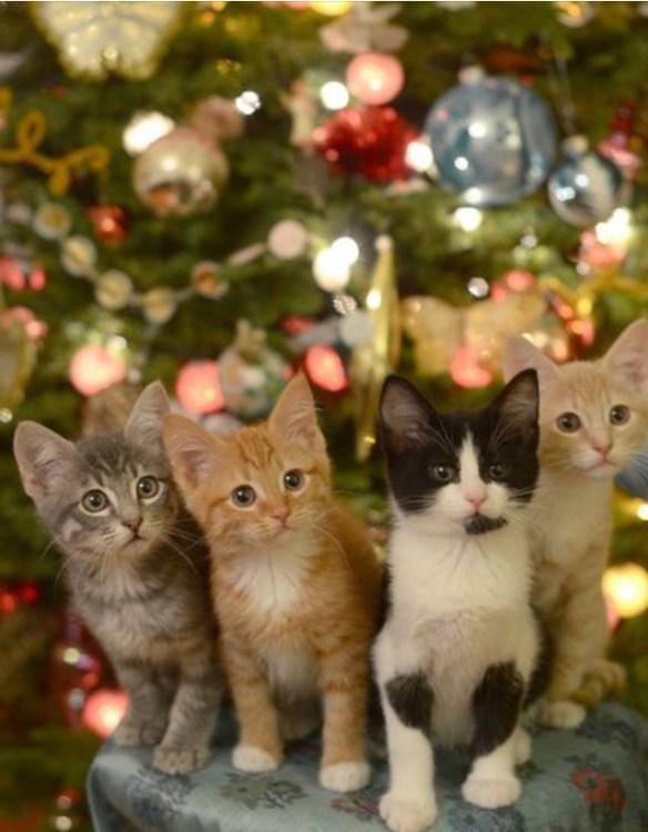 kattunger foran juletre