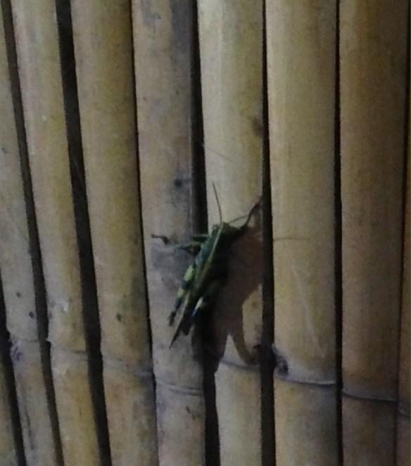 Green View Resort Gresshoppe i bambushytten