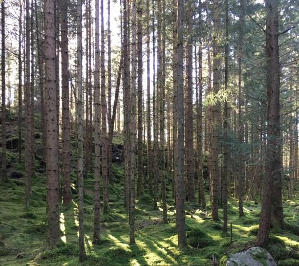 fin natur på vei gjennom Lien på Asksiden lindaslilleverden