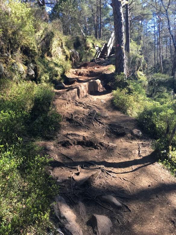 Skogsstier fra Steinrusten til Kolbeinsvarden – Kopi – Kopi