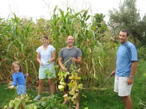 harvesting edamame in VT