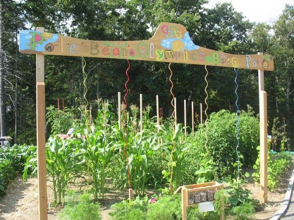 pole beans in CMBG garden