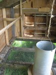 inside the mobile chicken coop