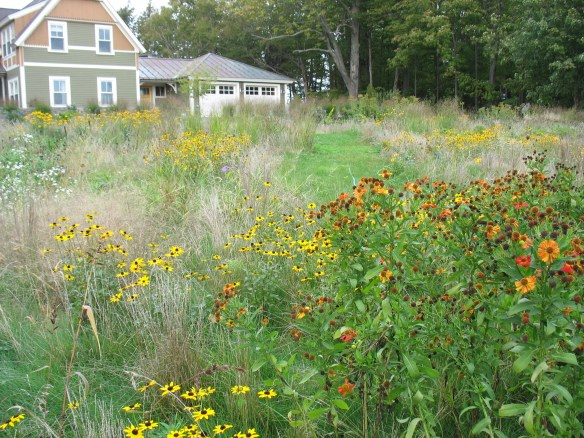 native plant meadow in VT