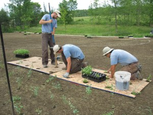 planting-native-plant-plugs-in-meadow