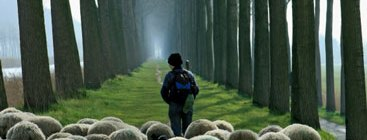 shepherd-and-sheep1
