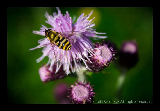flower_and_bee