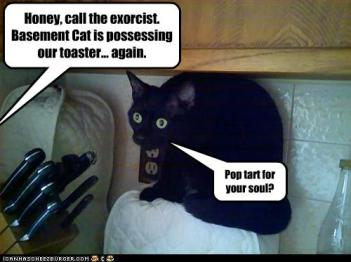 basement_cat_toaster