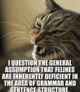 lolcat-i-question-the-general-assumption-that-feli1