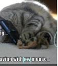 Phonecat