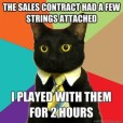 contract-lolcat