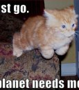 funny-cat-lolcat-my-planet-needs-me
