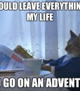 adventure-realization-cat