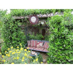 Innovative Confederate Jasmine Has To Be Trained On A Wire Or It Makes An Confederate Jasmine Landscape Star Jasmine Vine Seeds Star Jasmine Vine Evergreen