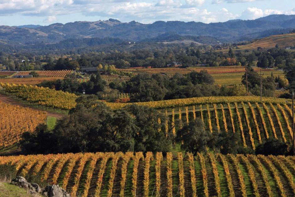 Alexander Valley Vineyards Fall
