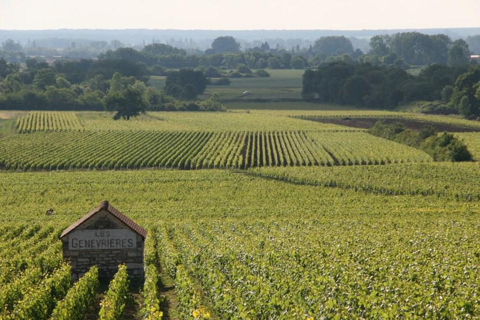 Genevrieres Vineyards, Meursault, Burgundy, France