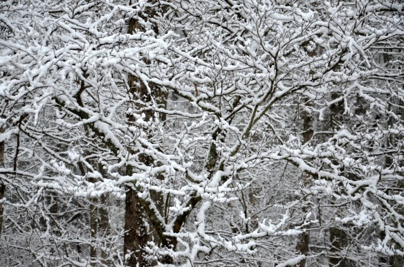 Snow covered trees are so beautiful