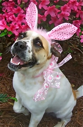 Hoppy Easter from Lucy the bunny–so cute in Pink