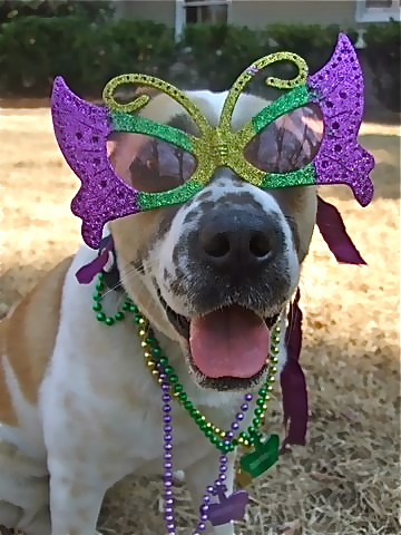 Lucy is ready for 'Fat Tuesday'–who found the 'baby' in the King cake