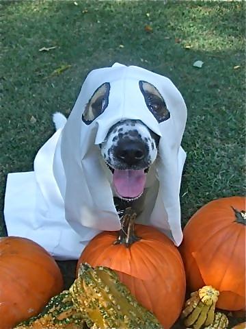 Boo! Have a spook-taculor Halloween