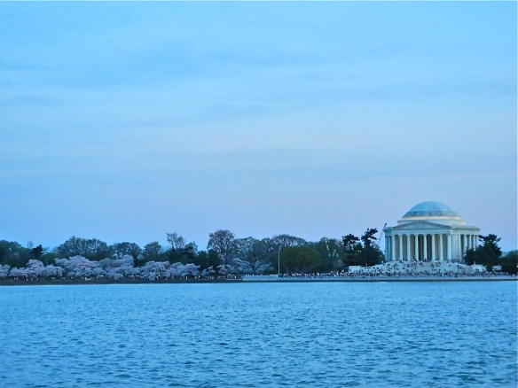 Pink blooms line the way to the Lincoln Memorial