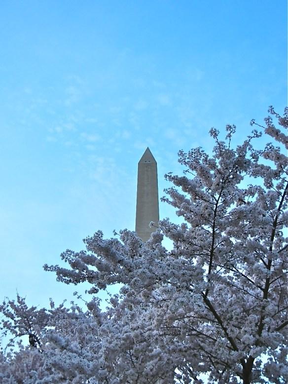 Washington Monument through the blooms