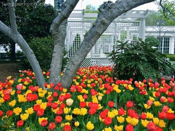 A plethora of tulips surround trees and a stunning gazebo ... I need a gazebo and more tulips