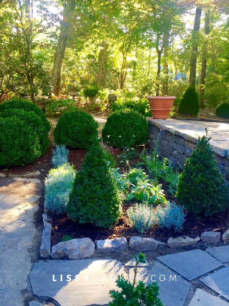 entry garden toipary boxwood