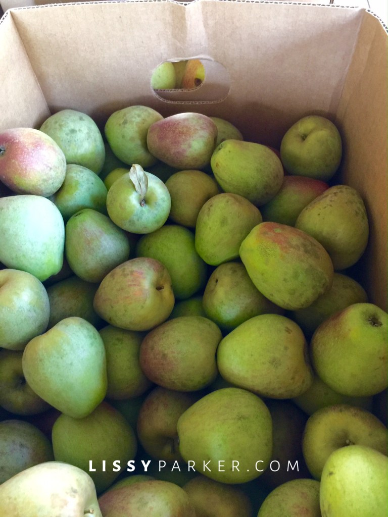 Sheep's nose apples