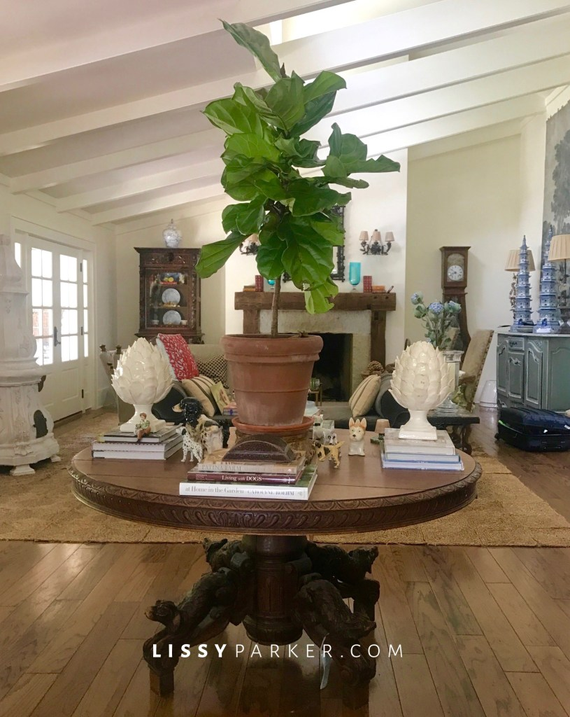 Irish table, fiddle leaf fig