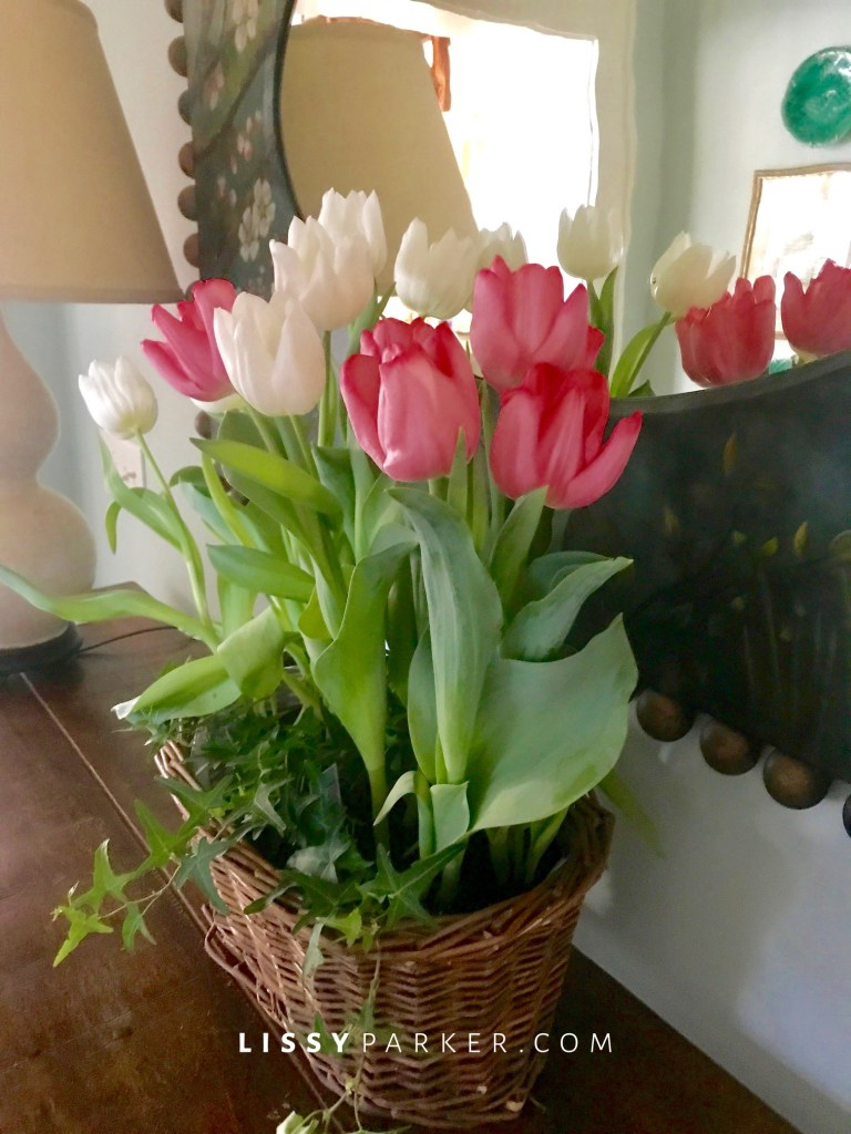 pink and white tulips.