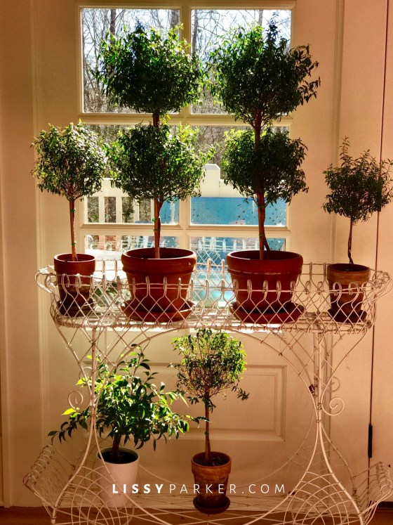 Topiary in a window